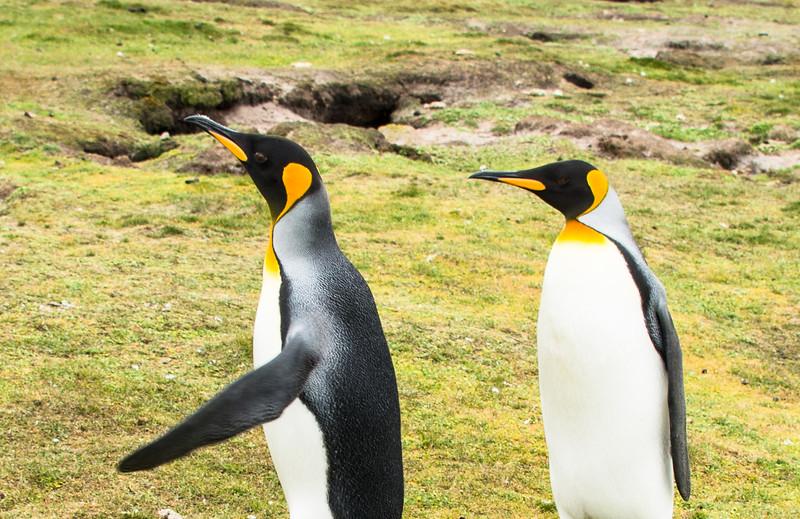 Penguins2_124
