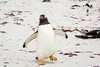Penguins2_080