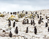 Penguins2_066