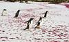 Penguins2_069