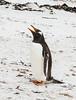 Penguins2_088