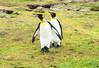 Penguins2_125