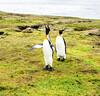 Penguins2_126