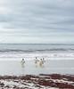 Penguins2_071