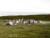 Penguins2_094