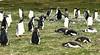 Penguins2_090