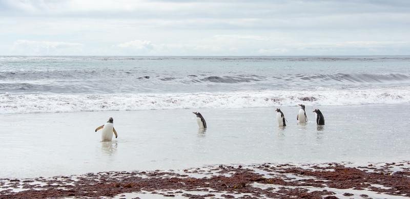 Penguins2_072