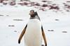 Penguins2_083