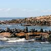 107 Seawolves Island