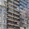 Architecture of Buenos Aires with a purple flowering jacaranda tree