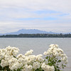 "Puerto Varas, located on the shore of Lake Llanquihue, is known as the ""City of Roses"". Osorno volcano viewed from the shore."