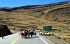 Bolivia_020