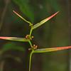 bird-of-paradise-like plant