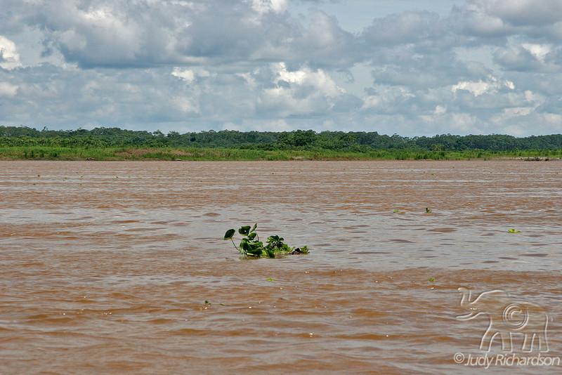 Muddy, swift flowing Amazon River