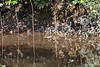 Fishing net with reflection in tributary of the Amazon River