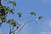 Wasp paper~nest