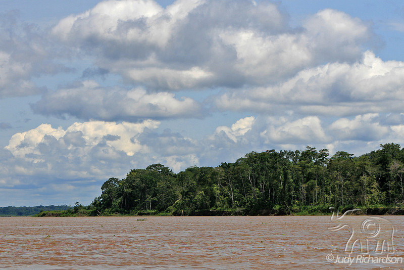 Muddy Amazon River