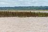 Scrub Grass in the Amazon