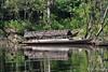 Covered Boat in stream