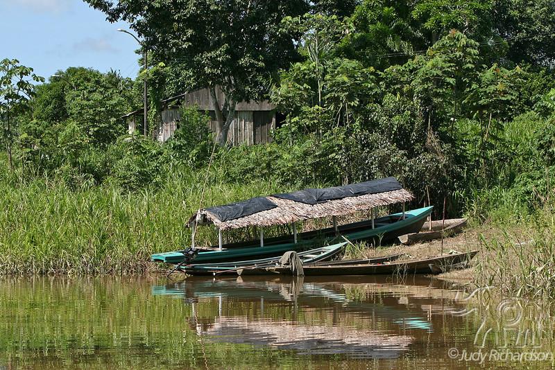 Scenic View of Amazon tributary