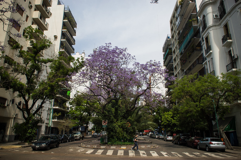 Palermo Neighborhood - Buenos Aires
