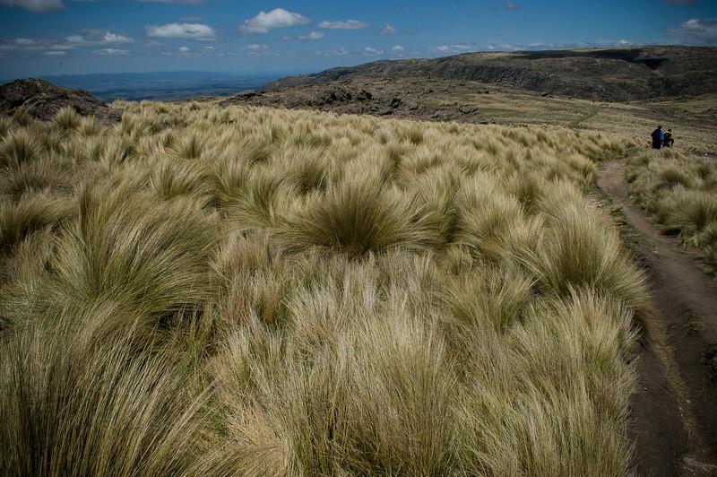 Pampa Grass - Parque Nacional Quebrada Del Condorito - Argentina