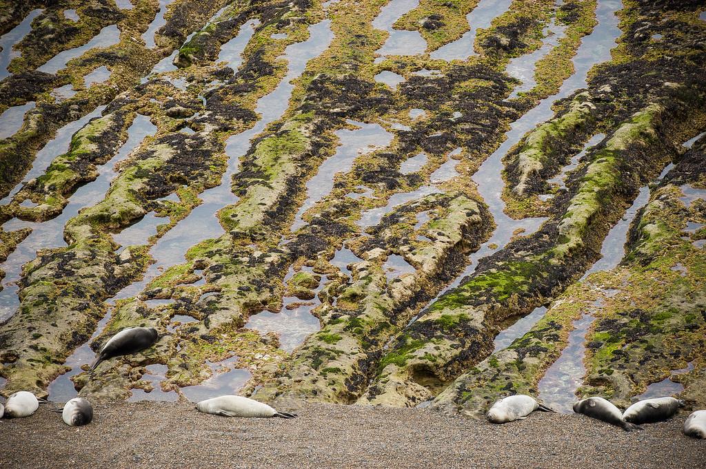 Elephant Seals - Peninsula Valdes, Argentina