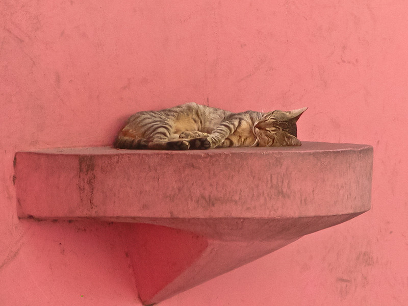 Sleeping Kitty, La Boca Disctrict, Buenos Aires, Argentina