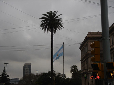 Palm tree in Argentina