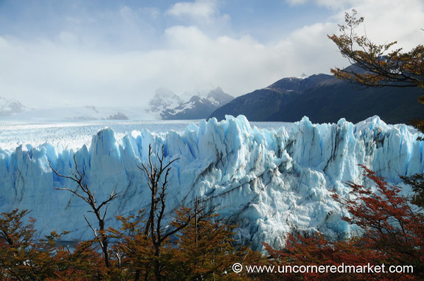 Red Leaves and Blue Ice - El Calafate, Argentina