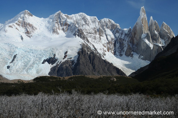 Mountains Looming Over Field of Trees - El Chalten, Argentina