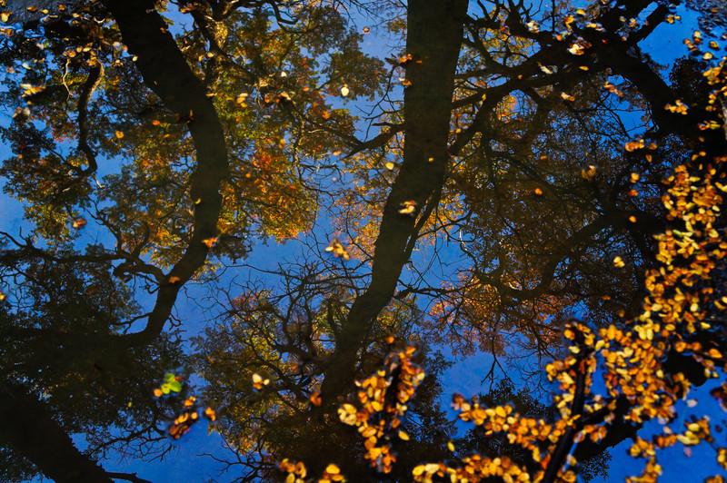 Fall trees in El Chaltén, Argentina