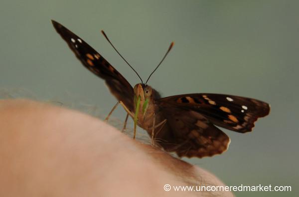 Butterfly Tongue - Iguazu Falls, Argentina