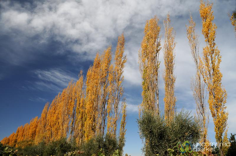Changing Seasons - Mendoza, Argentina