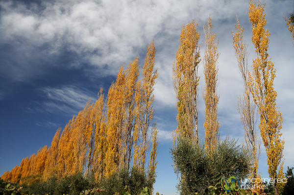 Changing Seasons - Mendoza, Argentina