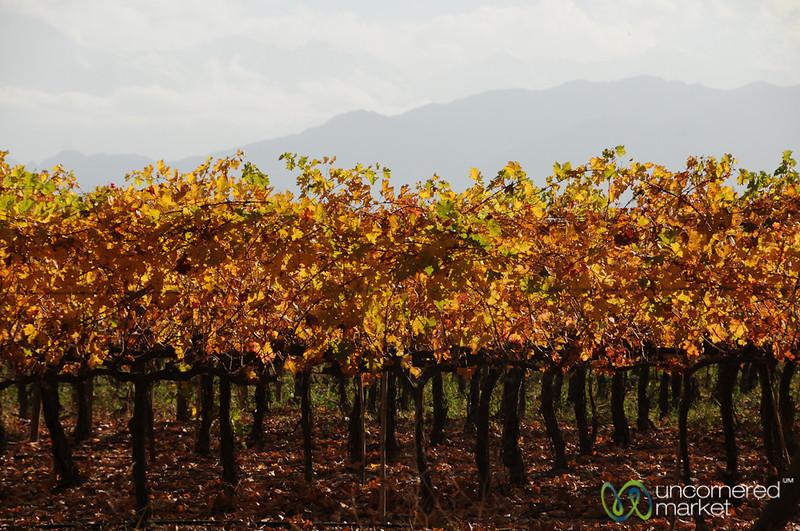 Autumn in the Vineyards of Mendoza, Argentina