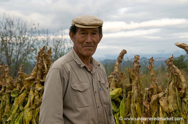 Teaching Us About Tobacco - Outside Salta, Argentina