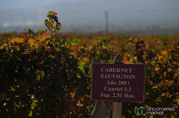 Cabernet Sauvignon Grapes Growing Outside Cafayate, Argentina