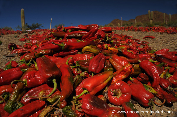 Semi-Dried Chilies - Northern Argentina