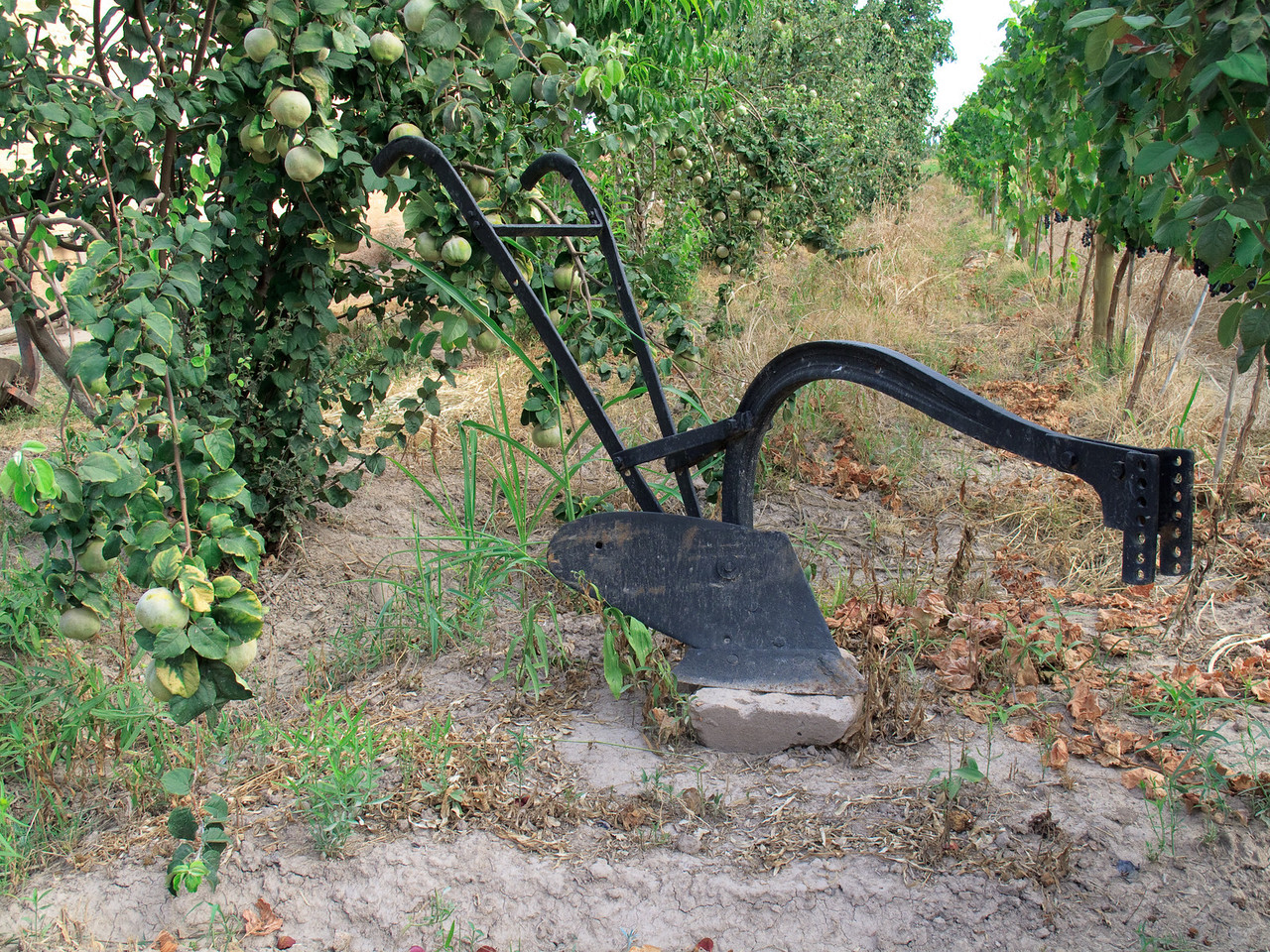 Farm Tool in Maipu
