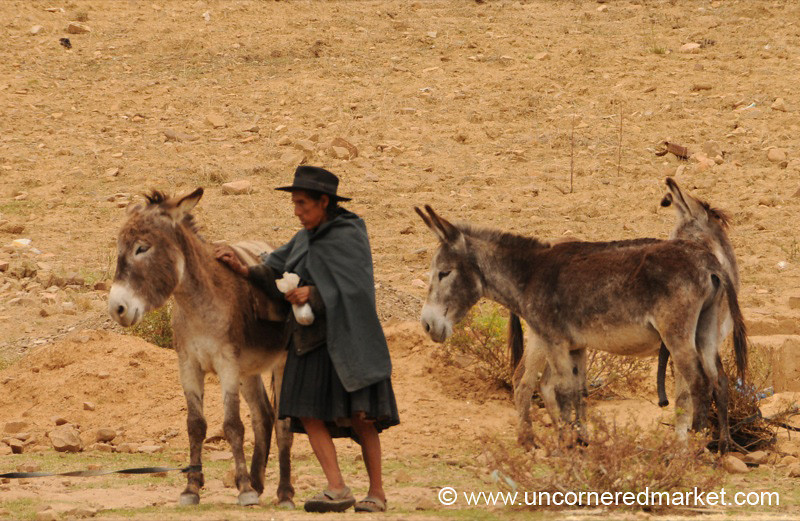 Taking Donkeys to Market - Tarabuco, Bolivia