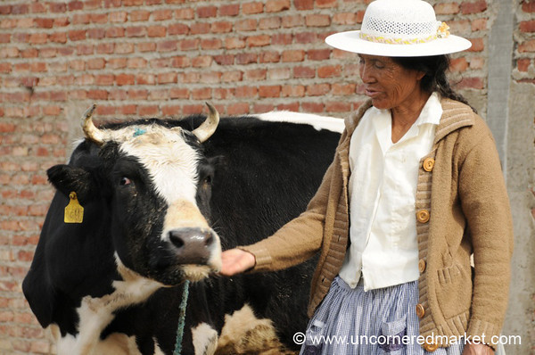 Tickling Her Favorite Cow - Outside Cochabamba, Bolivia