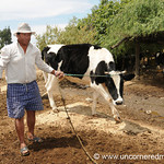 Bringing In His Cow - Outside Cochabamba, Bolivia