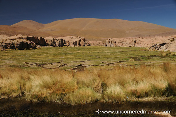 Moss Flats - Salar Tour, Bolivia