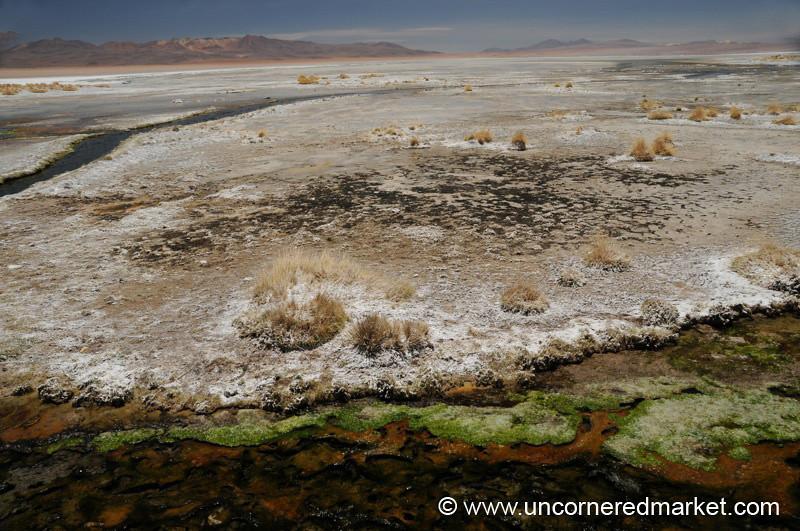 Moss and Saltscape - Salar Tour, Bolivia