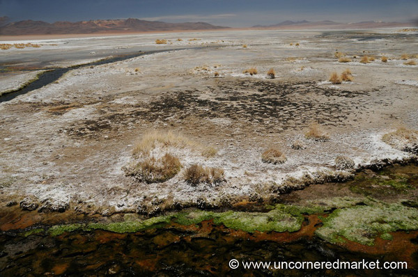 Moss and Saltscape - Salar Tour, Bolivia
