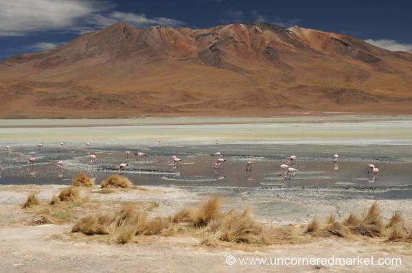 Laguna Hedionda - Salar Tour, Bolivia