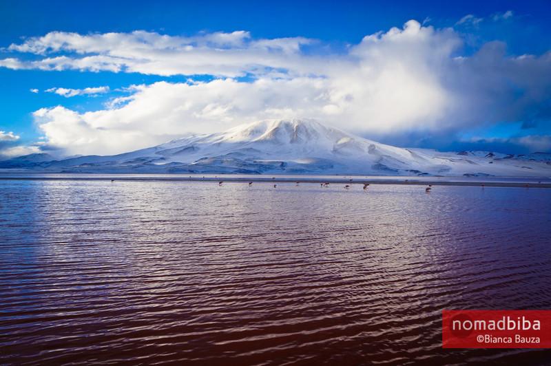 Salar de Uyuni: Laguna Colorada in Bolivia