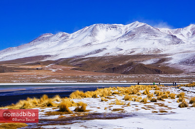 The freezing altiplano landscape in Bolivia