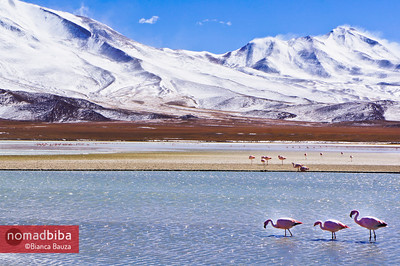 Flamingo spotting at Laguna Hedionda, Bolivia